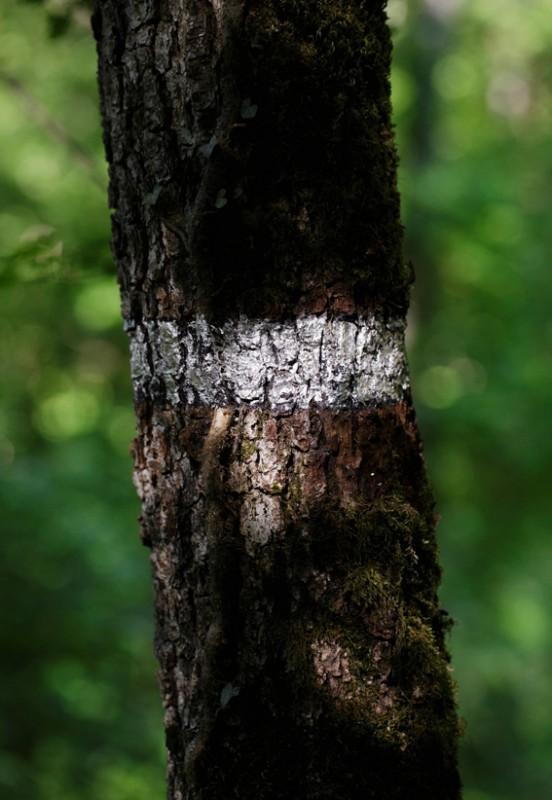 Grotte et arbre - Khejri, pour les arbres - 2017
